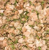 stock photo of dry grass  - Young green grass growing through the old dry birch leaves - JPG
