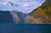 image of fjord  - Fjord Naeroyfjord in Norway  - JPG