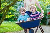 pic of wheelbarrow  - Two little boys having fun in a wheelbarrow pushing by mother in domestic garden on warm sunny day - JPG