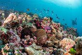 Постер, плакат: Maldives Hard Coral House For Fishes