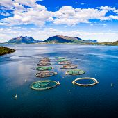 Farm salmon fishing in Norway Aerial FPV drone photography. poster
