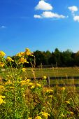 image of ragweed  - Rural summer landscape with blooming ragweed in foreground - JPG