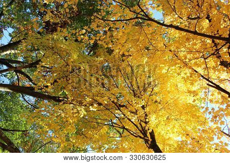 poster of Conceptual Image Of Hope, Change, And New Beginnings Seen In Colorful Orange And Yellow Leaves Turni