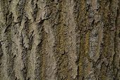 Bark Pattern Wood Tree Trunk Tree Trunk poster