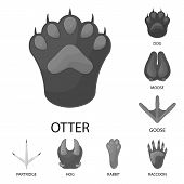 Isolated Object Of Wildlife And Trace Sign. Collection Of Wildlife And Walk Stock Symbol For Web. poster