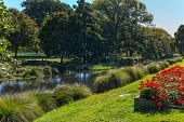 Beautiful meadow with flower beds. Indian summer in New Zealand. Rather river flows through the park poster