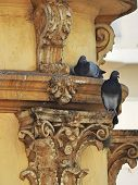 Two Gray Pigeons: One Is Perching On The Architrave Of An Old Building And The Other Is On The Corin poster