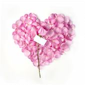 picture of heart shape  - Flower petals in heart shape with pink rose and blank card  - JPG