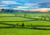 foto of bluegrass  - Horse farm in Kentucky - JPG