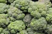 stock photo of cruciferous  - Fresh broccoli is a delicious vegetable that can be served many ways - JPG