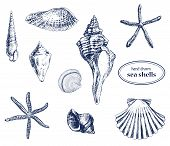 image of snail-shell  - Set of various hand drawn sea shells - JPG