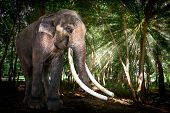 Bull Asia Elephant In Forest