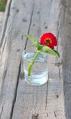 stock photo of tumblers  - red flower in the tumbler with water on the wood old board - JPG