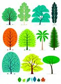 stock photo of walnut-tree  - 11 Various of Trees in simplified flat vector cartoon including Oak - JPG