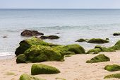 Atlantic Ocean Coast With Green Stones In Algae. Tangier, Morocco