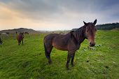 Horses In Irish Countryside