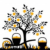 pic of hand-barrow  - vector apple tree and hand barrow with basket of apples - JPG