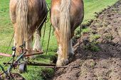 stock photo of horse plowing  - Two brown draft horses with a traditional plough - JPG