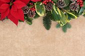 pic of mistletoe  - Christmas and winter flora background border with red poinsettia flower - JPG