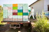 image of bee keeping  - Full length of young male beekeeper loading honeycomb crates in truck - JPG
