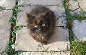 image of forlorn  - Homeless kitten sitting on brick walkway and looking at camera - JPG