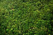 image of canary-islands  - Laurel forest in Canary Islands - JPG