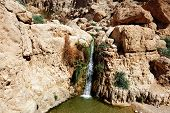 stock photo of dead plant  - Ein Gedi spring in the Dead Sea area Israel - JPG