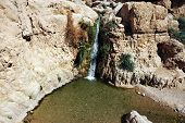 image of oasis  - Ein Gedi spring an oasis on the shore of Israel - JPG