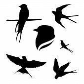 image of animal silhouette  - Svallow set of black silhouettes - JPG