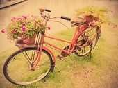 image of pottery  - Old red bicycle with flower pottery for decorative garden - JPG