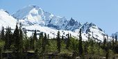 picture of wilder  - Trees and mountain peaks in Alaska - JPG