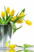 Постер, плакат: Весенние цветы