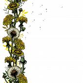 Vector Illustration Seamless Brush With Dandelions, Leaves, Flower Meadow. Summer Flower Natural Sea poster