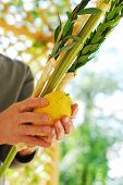 Shaking the Lulav