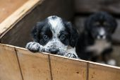 Cute Little Puppy In A Wooden Box Is Asking To Be Adopted With Hope. Homeless Dog poster