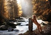A Dog By The Waterfall. Pet On The Nature By The Water, Healthy Lifestyle. Traveling With The Pet. N poster