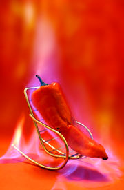 pic of red hot chilli peppers  - chilli pepper in the hot seat - JPG