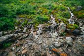 Scenic Landscape With Many Clear Spring Water Streams Among Thick Moss And Lush Vegetation. Mountain poster