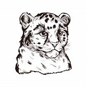 Leopard Babby Tabby Vector Portrait Of Exotic Animal Isolated Sketch. Panther Looking Aside. Felidae poster