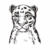 Sunda Clouded Leopard Baby Tabby Vector Portrait Closeup Isolated Sketch T-shirt Print, Monochrome.  poster