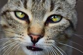 Cat With Green Eyes And Interesting Look, Cat Portrait, Cat Close-up Portrait, Sad Cat, Adorable Cat poster