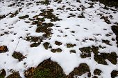 Woodland And Forest Ground Covered With Layer Of Snow. Close Up. Part Of Winter Snow In Field. White poster
