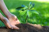 Growing Seedlings With Complete Soil. Green Tone Natural Background. The Idea Of Planting Trees To S poster