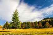 Spruce In The Foreground Of The Forest In Autumn Season. poster