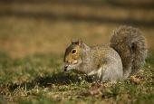 Shadowy Squirrel