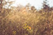 Meadow In Sunset In Nature. Sunset In Meadow Nature Background. Close Up Of Meadow In Nature. Macro  poster
