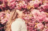 Kid On Pink Flowers Of Sakura Tree Background. Botany Concept. Kid Enjoying Cherry Blossom Sakura. F poster
