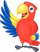 picture of animated cartoon  - Vector illustration of Macaw bird cartoon waving - JPG