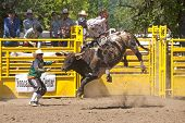 pic of bull-riding  - YONCALLA - JPG