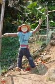 pic of lantau island  - Vegetable garden with a scarecrow at Lantau island Hong Kong - JPG
